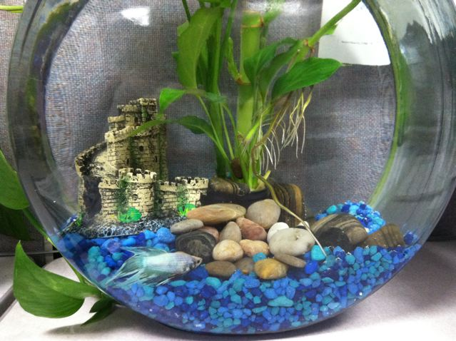 Betta Fish Bowl Decorations Upside Down Betta Aquarium  3 Gallon Capacity 100% Fully Clear