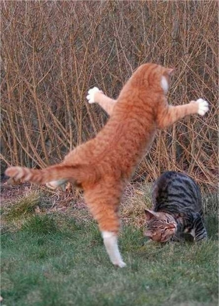 Cats-with-Mad-Ninja-Skills-2